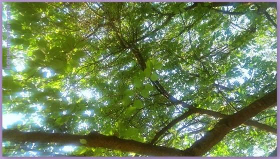 KK Sommertag unterm Baum