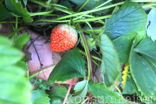 kk-erdbeere-1