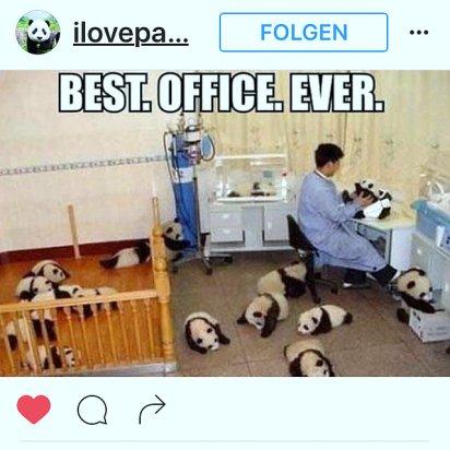 kk-insta-pandas