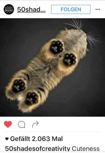 kk-cat