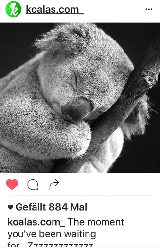 kk-koala-sleeping