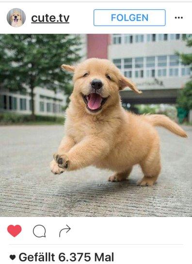 lachender-hund