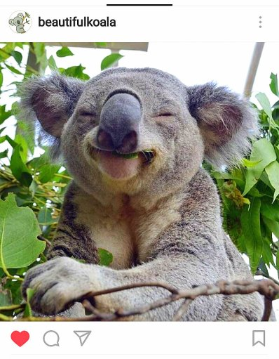 kk-koala12